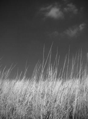 grasses-2