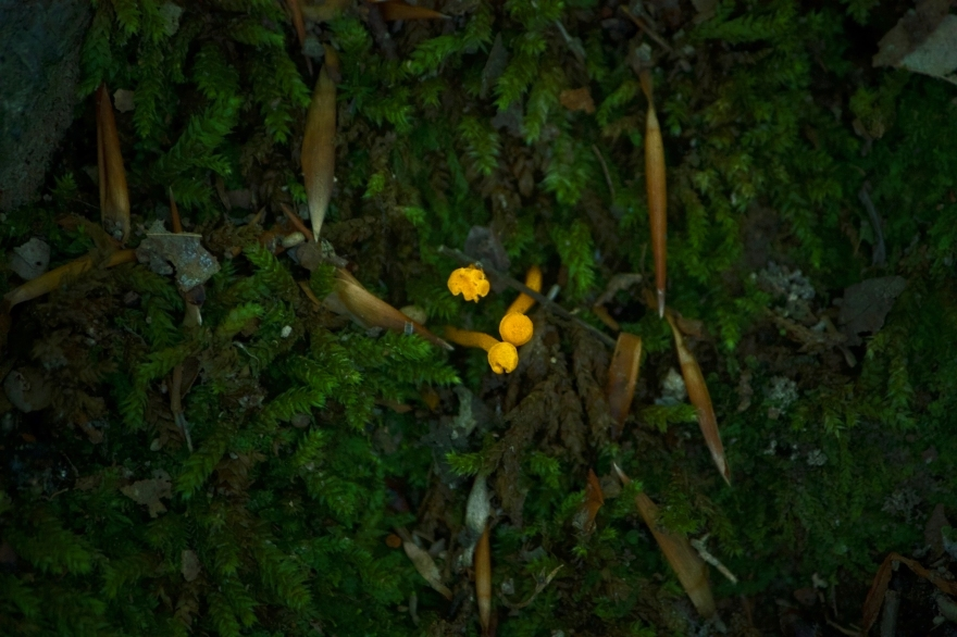 Moss-mushrooms
