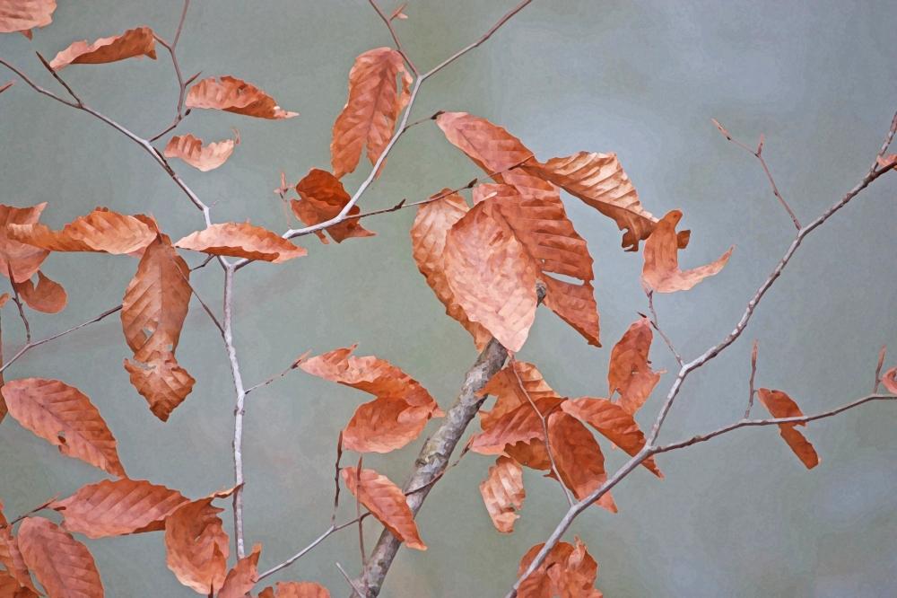 Orange leaves - brushed