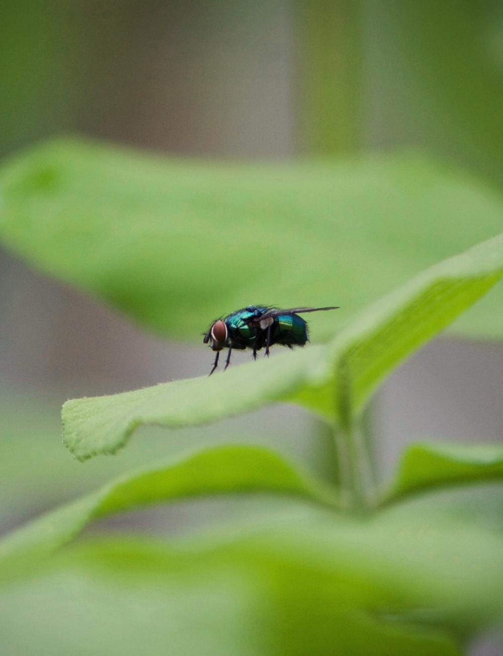 Fly-cropped