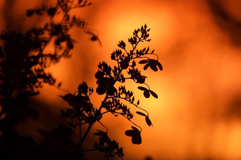 Sunrise-1117